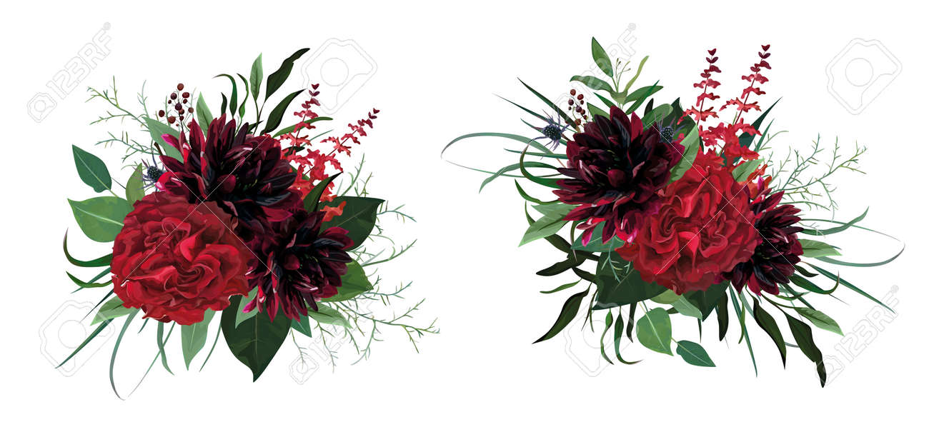 Beautiful luxurious burgundy red, green watercolor style vector bouquet. Garden roses, dahlia flower, greenery eucalyptus leaves, herbs, thistle, berry lovely, editable, designer element illustration - 164459623