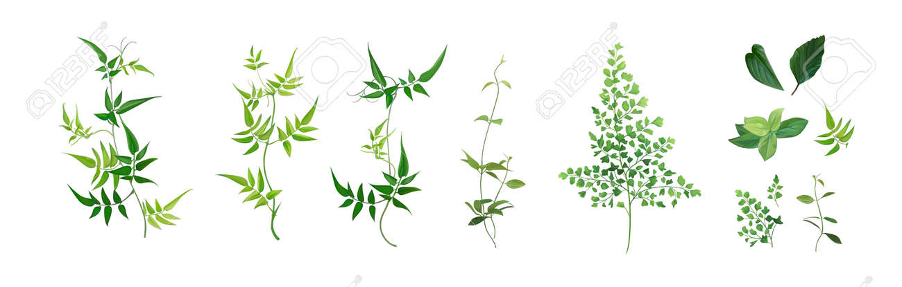 Vector designer elements set, collection. Green forest fern, tropical green smilax Jackson vine greenery foliage, herbs. Watercolor style. Beautiful art editable illustration for wedding invite design - 166167457