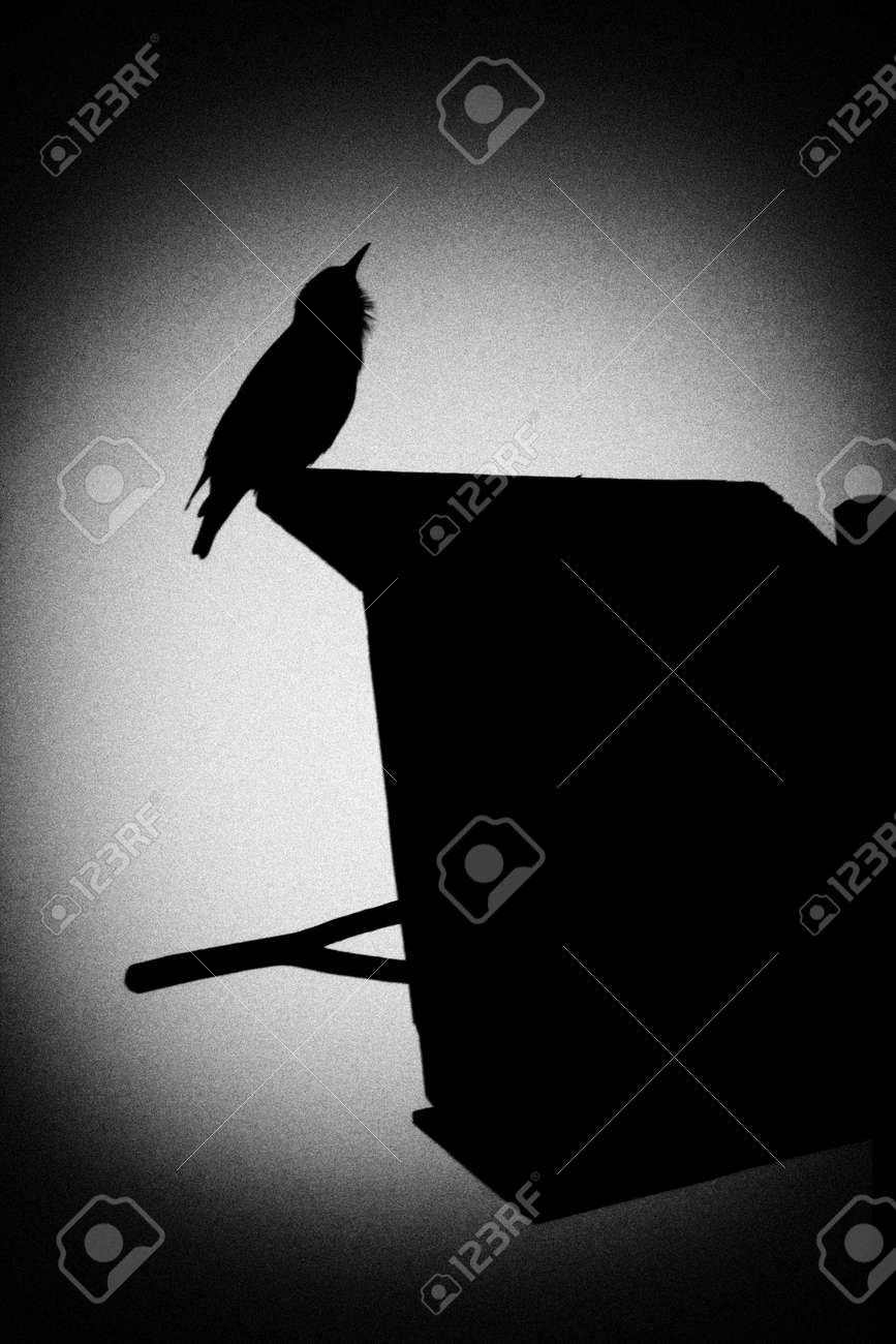 Charming A Starling Silhouette That Sings A Spring Song. Illustration. Stock  Illustration   77785780