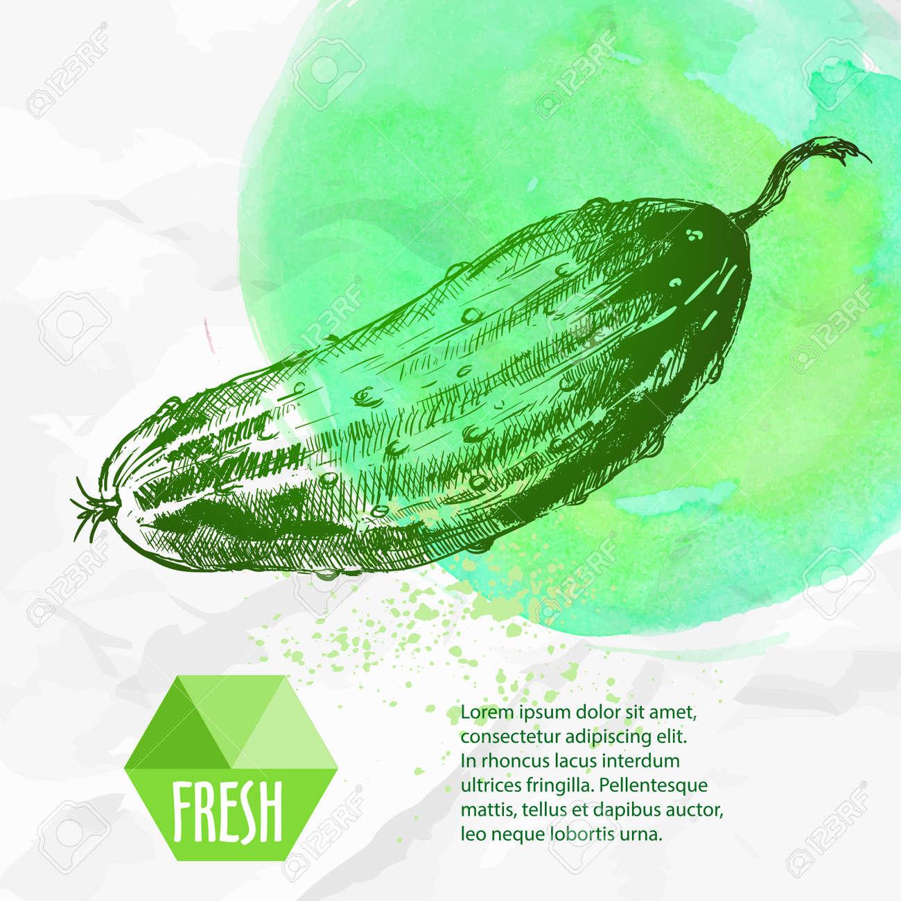 Hand Drawn Fresh Cucumber. Vintage Sketch Style Organic Eco ...
