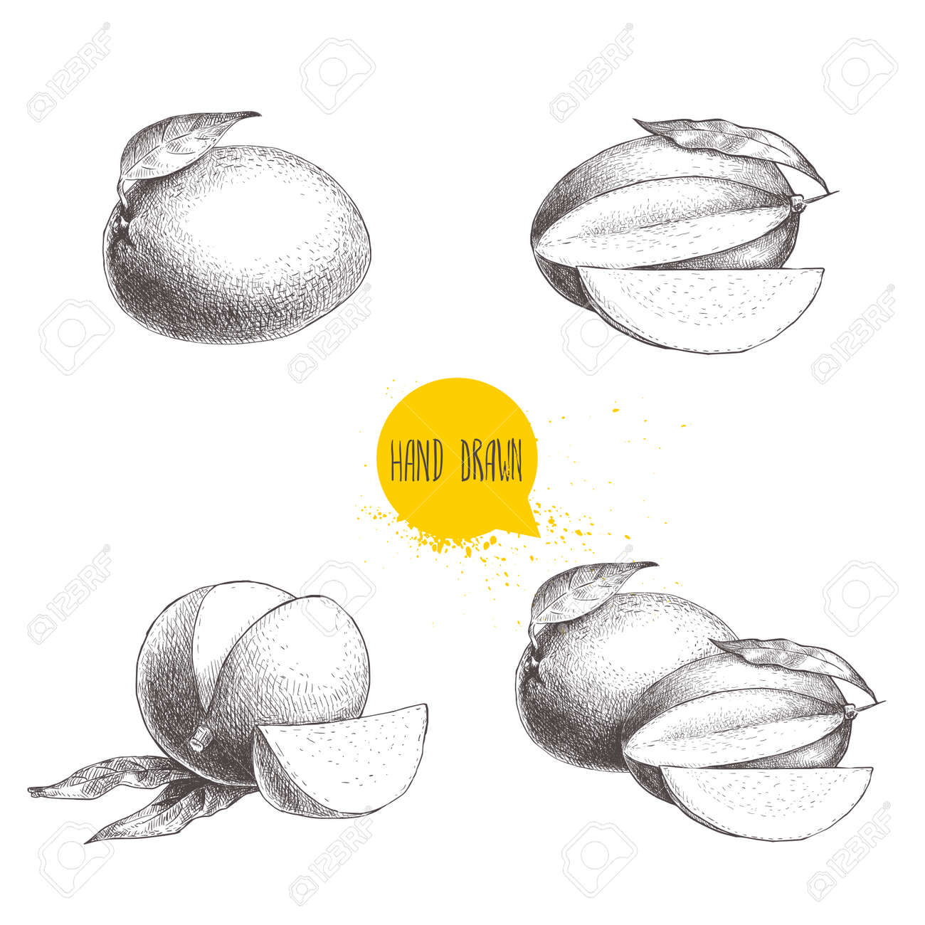 Hand drawn mango fruits set with leafs and slices sketch style vector fruit illustration isolated