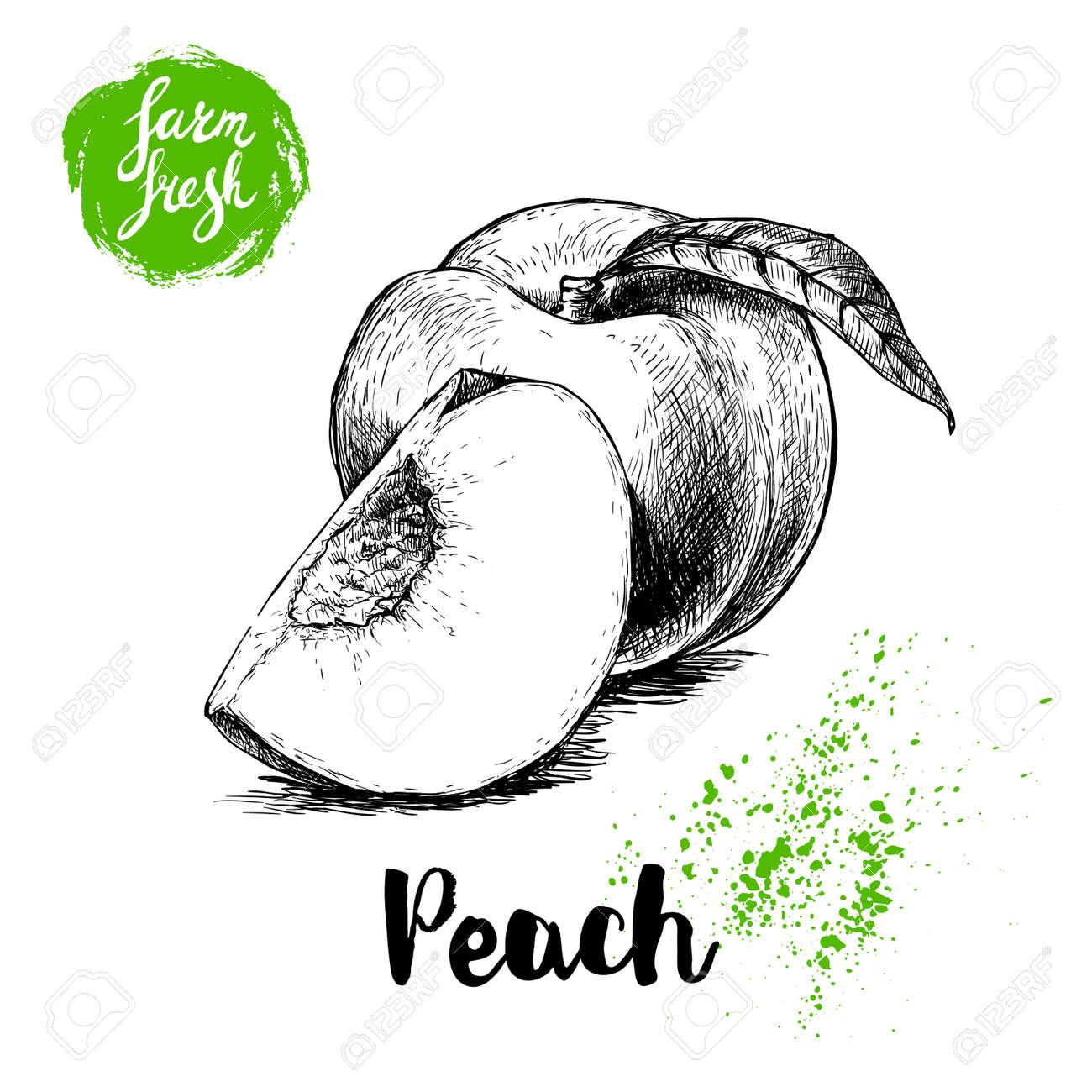 Hand Gezeichnete Skizze Stil Pfirsich Nüsse Reife Süße Pfirsich