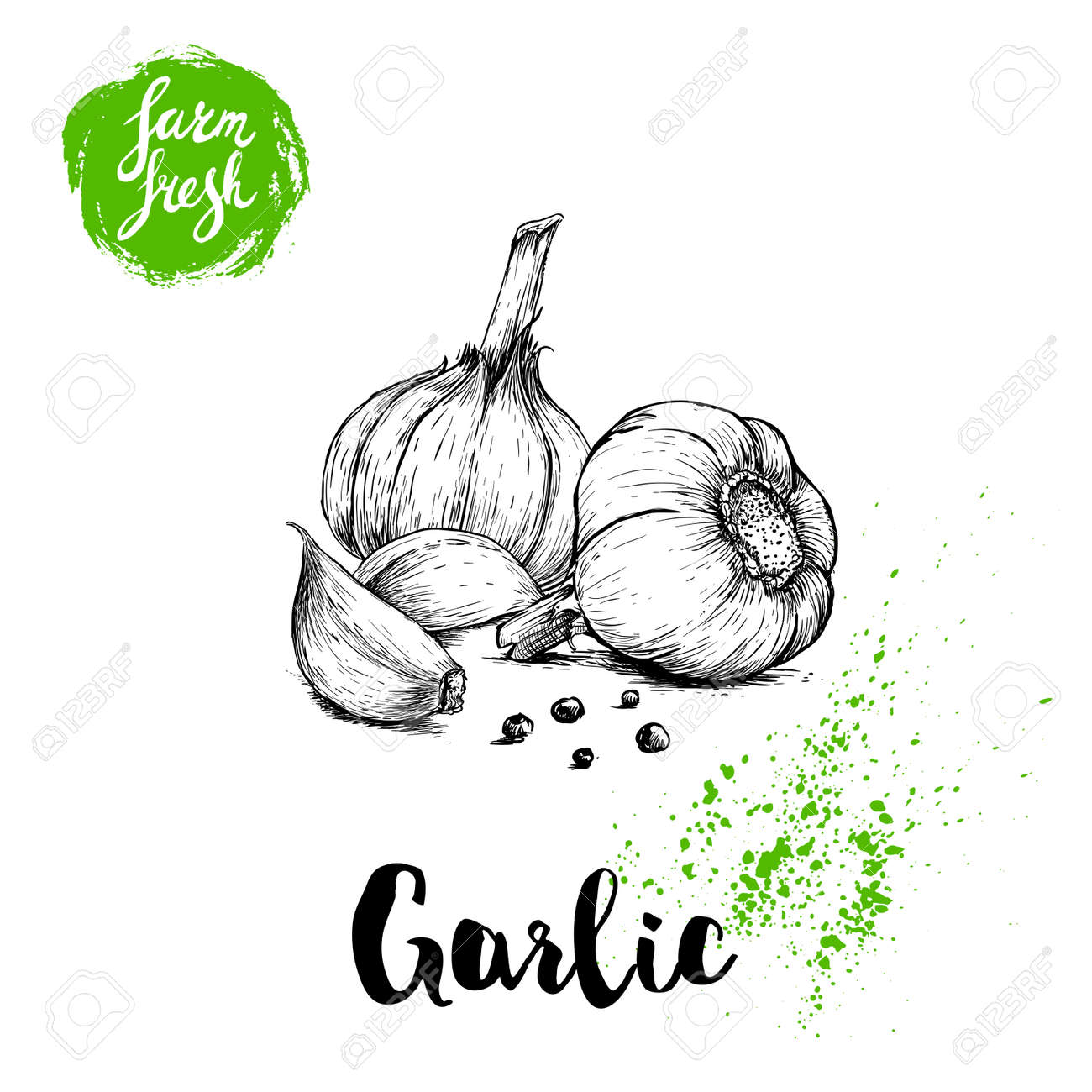 Hand drawn sketch garlic group with black pepper. Fresh farm food vector illustration. Farm vegetables poster. - 85277126