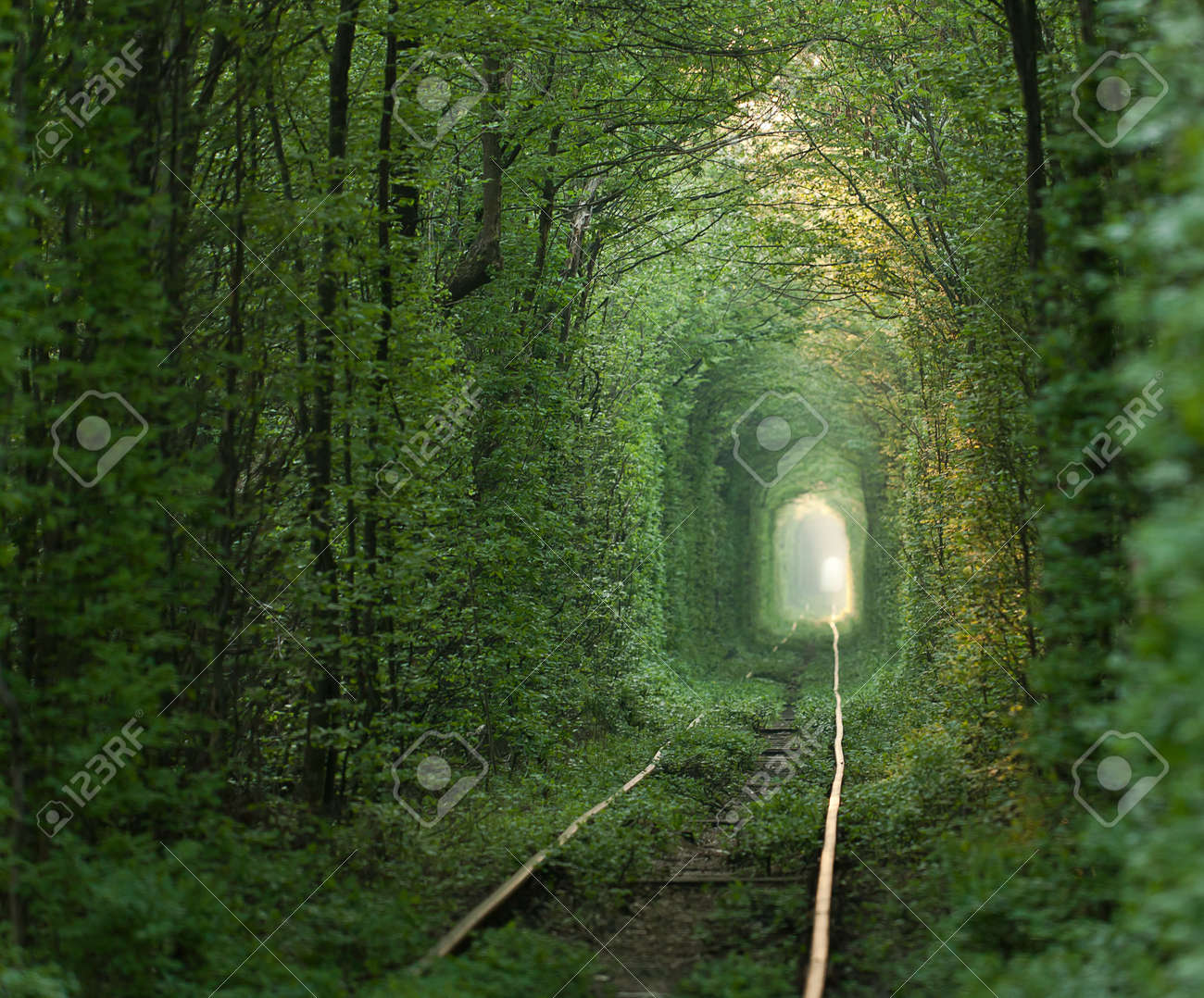 Natural tunnel of love formed by trees in Ukraine, Klevan - 15891744