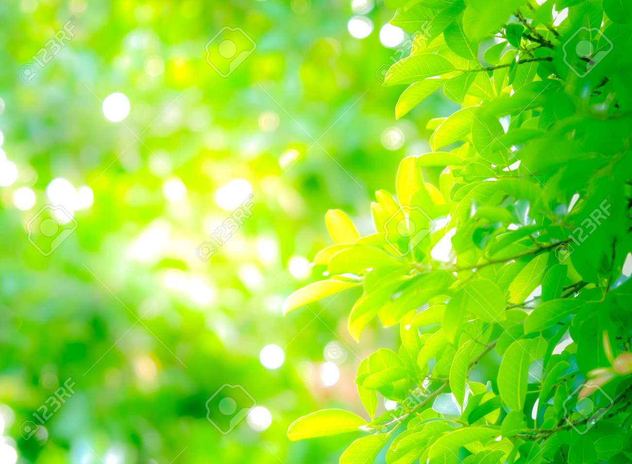 Close Up Beautiful Natural View Green Leaves With Sunlight On