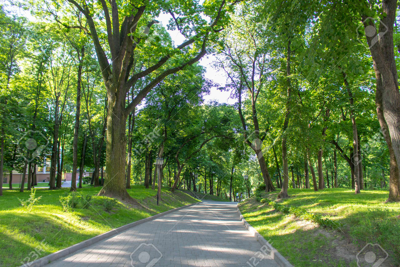 Alley in the Park on a summer morning - 149374332
