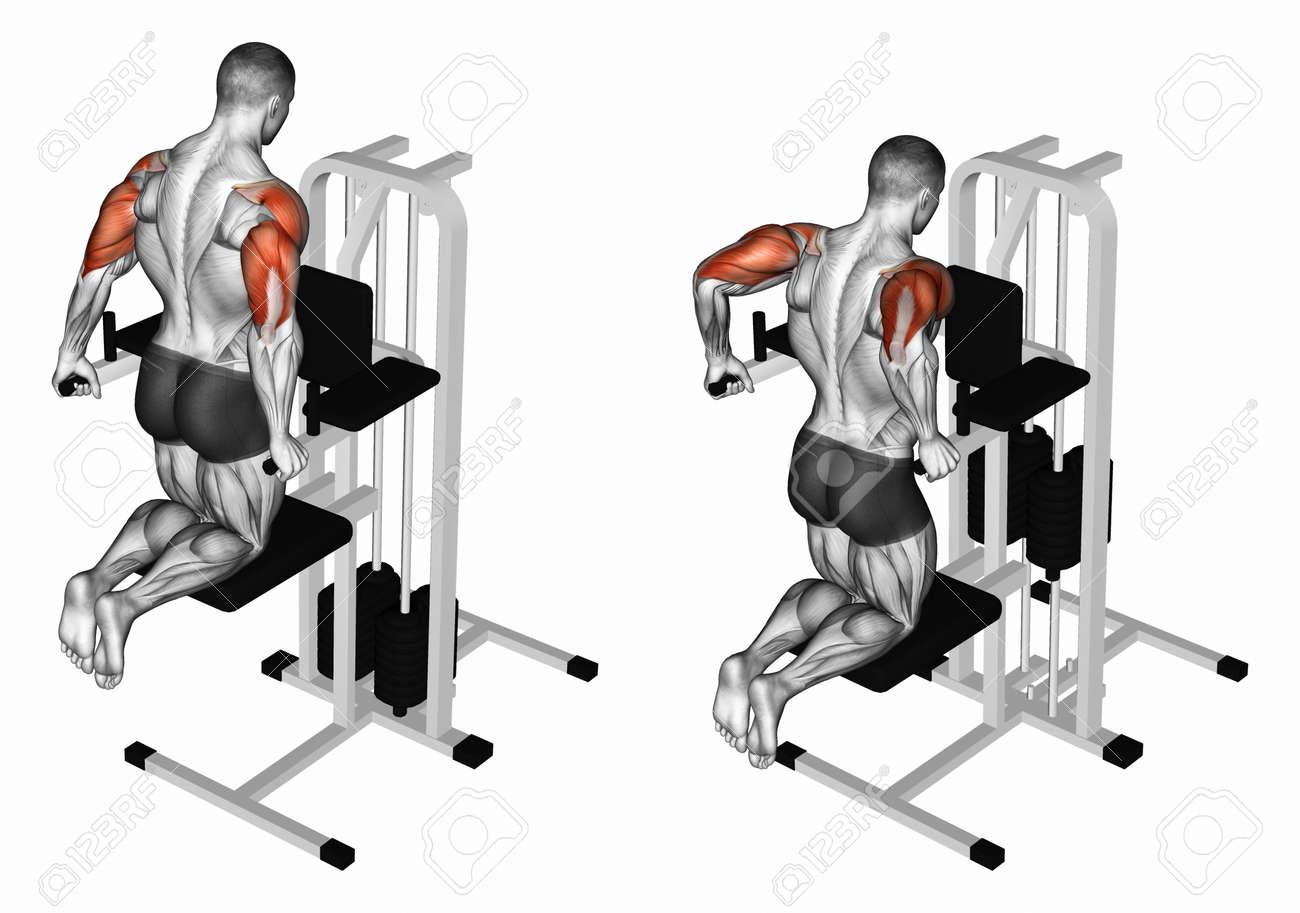 Exercice pour la musculation. muscles cibles sont marqués en rouge. Les  étapes initiales et finales. illustration 3D a4e83df7f48
