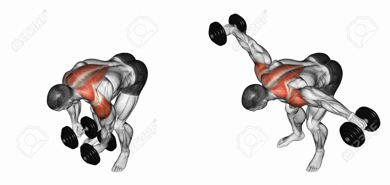 Banque d images - Levage haltère dans la main pour se pencher en avant. Exercice  pour la musculation. muscles cibles sont marqués en rouge. e4aaeed1e54