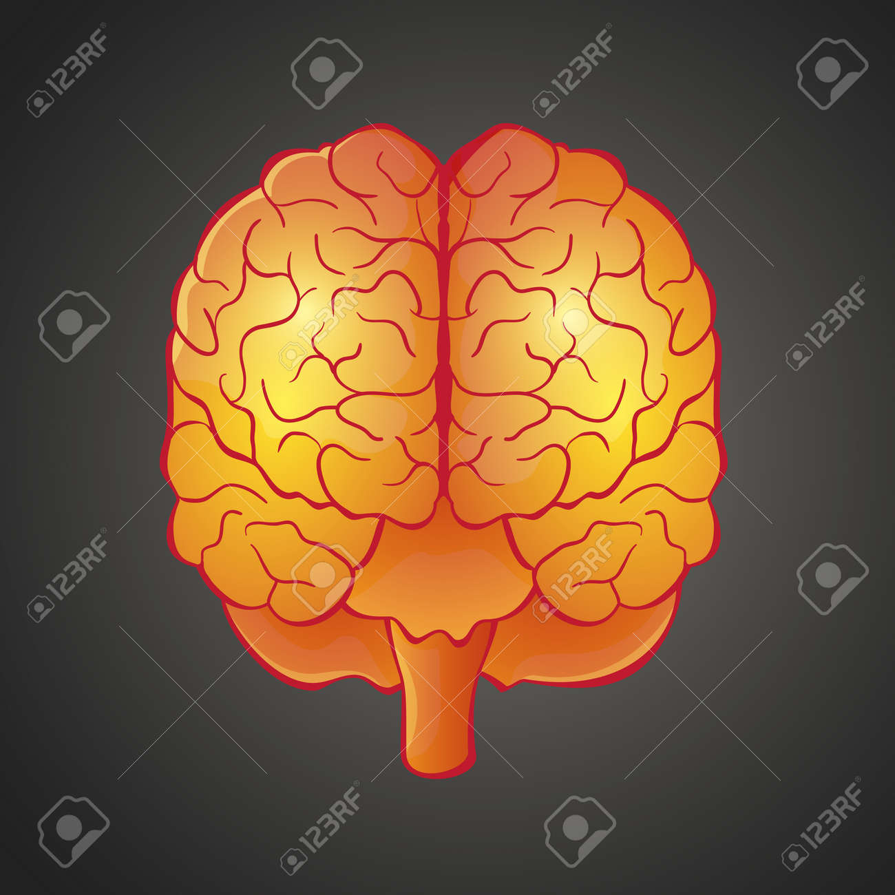illustration of human organ brain front view in bright colors - 17521818