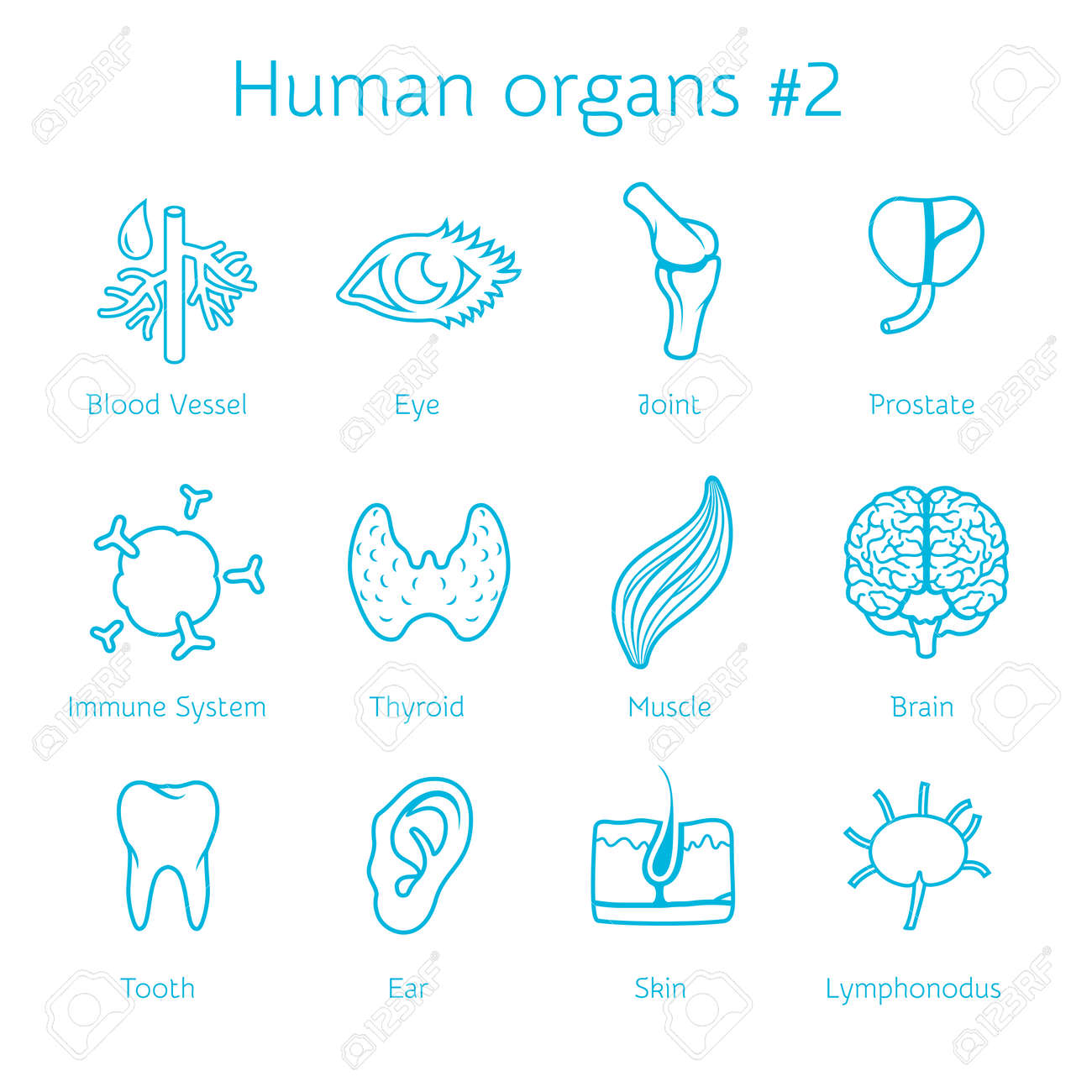 Vector illustration of outline icons human organs for infographic - 27552573