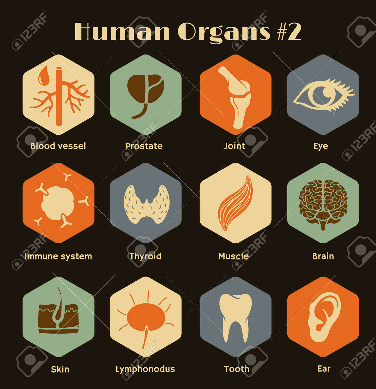 Vector retro icons of human organs and systems Flat design - 27552574