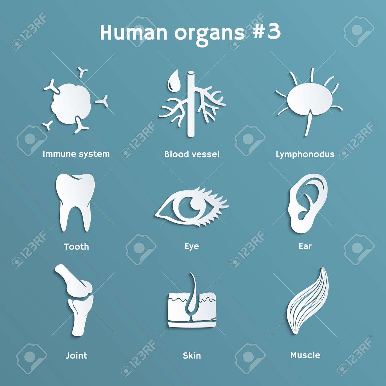 Vector paper icons of organs and systems of human body - 27898132