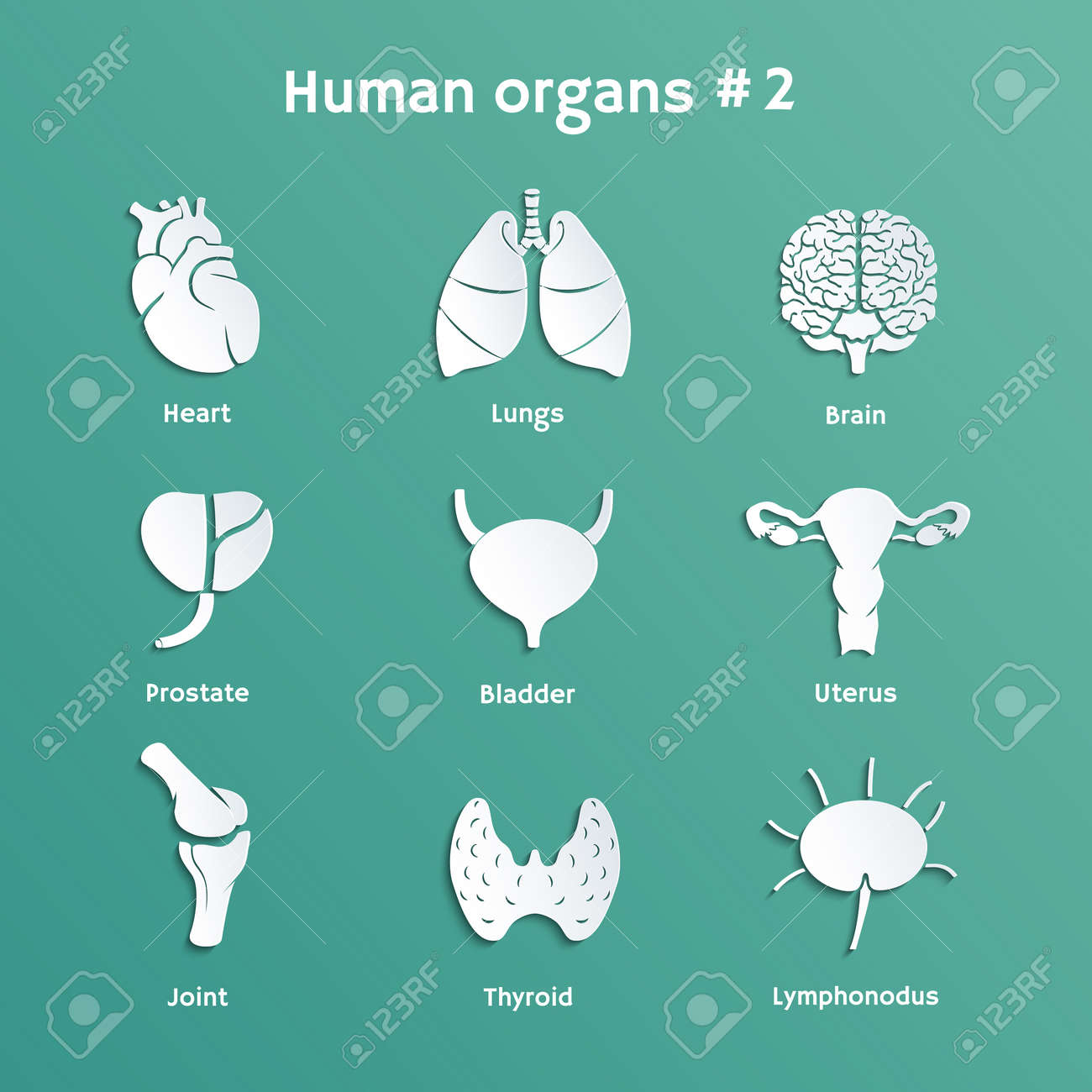 Vector Paper Icons With Shadows Of Internal Human Organs Royalty ...