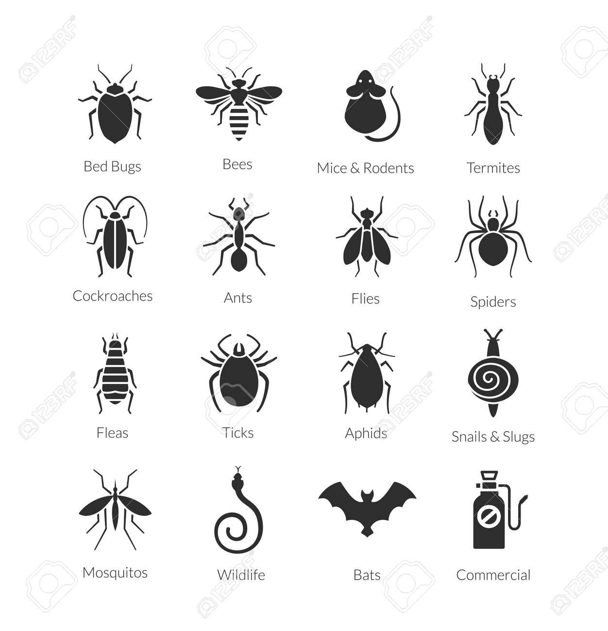 Small Beetles In Bedroom Black Bugs