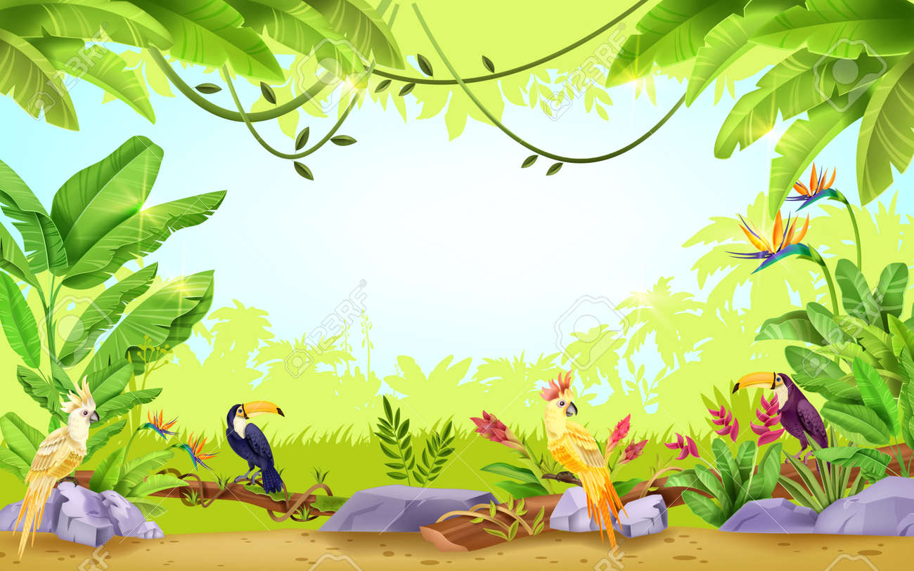 Jungle vector tropical rainforest frame, nature paradise exotic background, toucan, parrot, liana, banana leaf. Summer Hawaii environment wildlife illustration, palm silhouette. Jungle frame, branch - 168189383