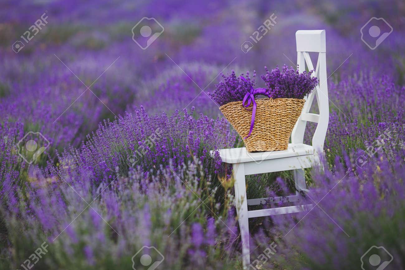 Té, Champ De Floraison De La Lavande Lilas, Chaise Blanche Avec Dossier  Figure Parmi Les Fleurs Sur La Chaise Est Brun Panier En Osier Plein De  Fleurs De