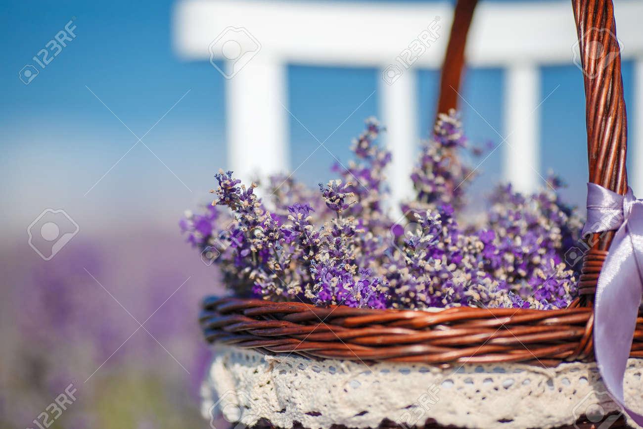 Té, Champ De Floraison Lilas De Lavande, Chaise Blanche Avec Dossier Figure  Parmi Les Fleurs Sur La Chaise Est Brun Panier En Osier Plein De Fleurs De