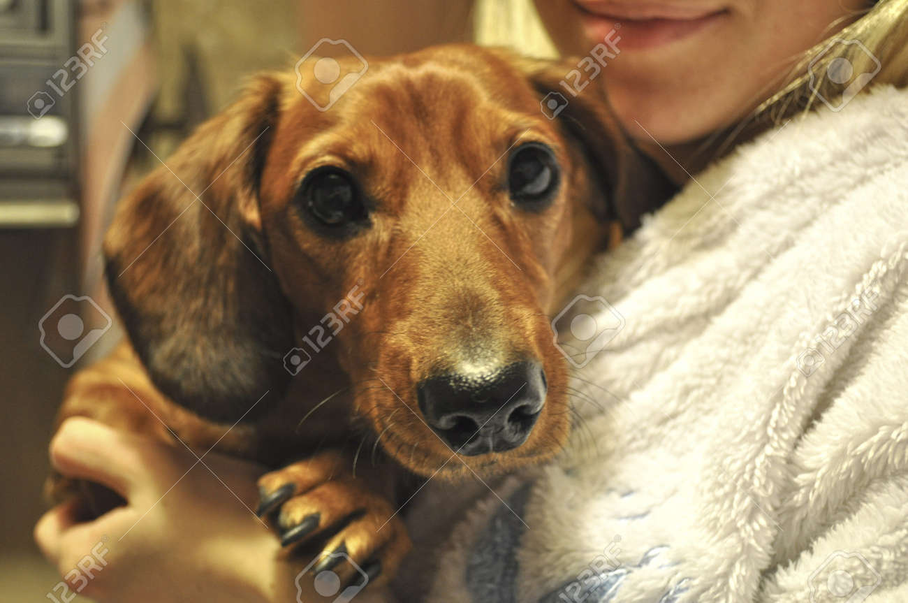 The cute dog Stock Photo - 13522345