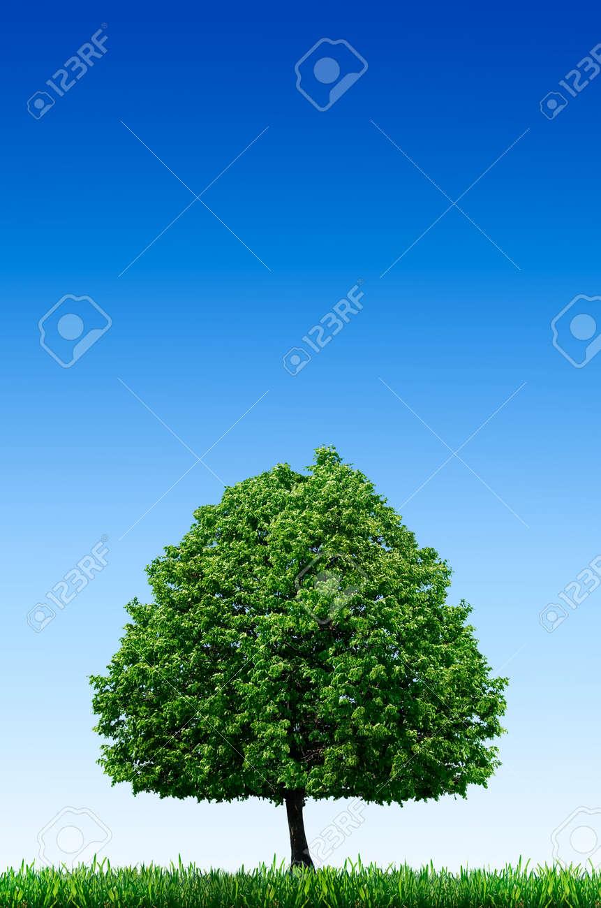 Lonely Tree In A Field Against A Blue Sky Landscape Desktop
