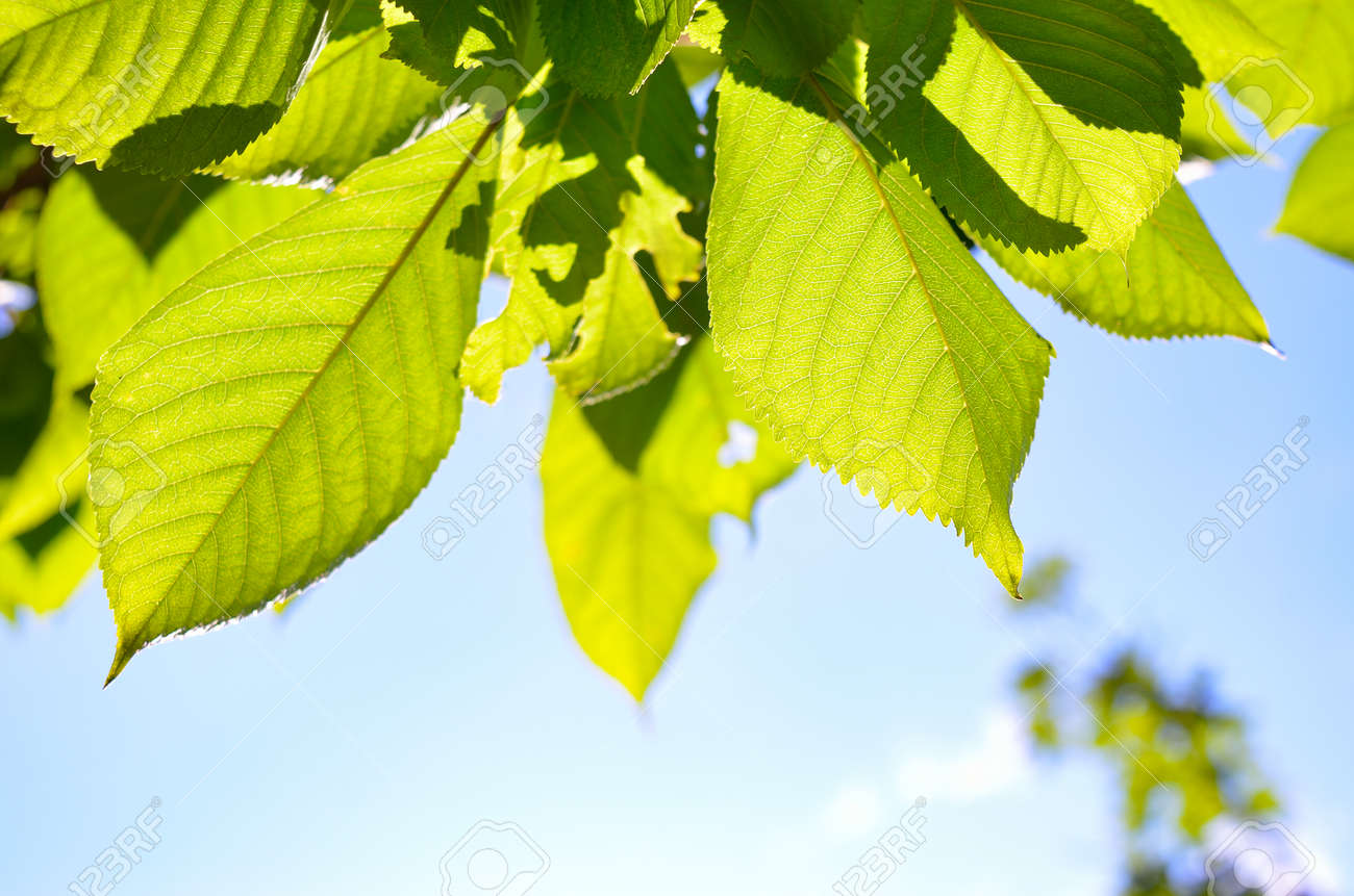 Green leaves in the foreground against a blue sky - 153963293
