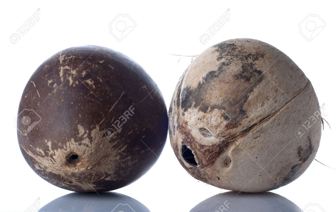Two coconut isolated on white background Stock Photo - 17937434