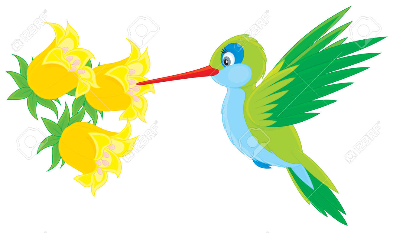 Humming-bird Flying Over A Tropical Flower Royalty Free Cliparts ...