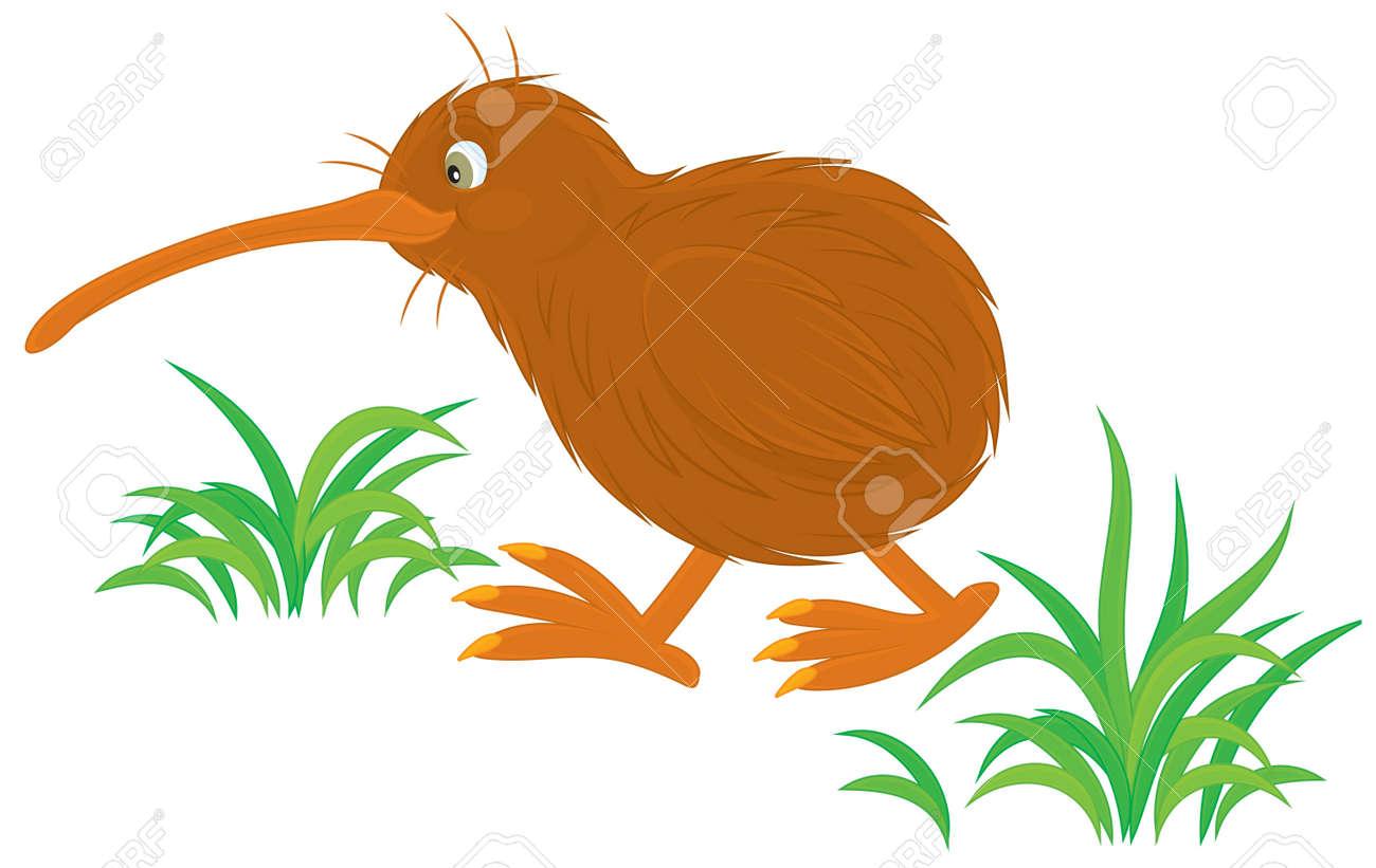 Kiwi Cartoon Drawing Kiwi Kiwi Cartoon Bird
