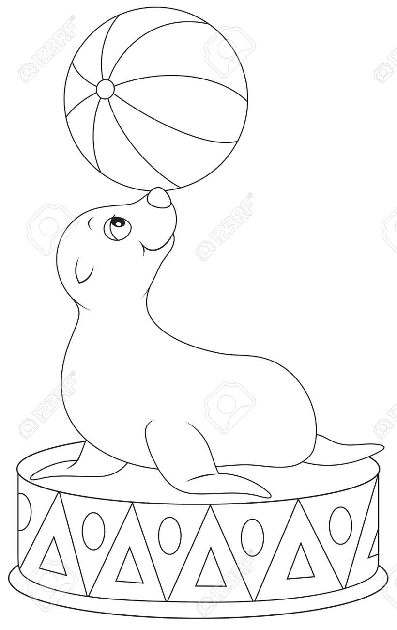 circus seal coloring pages virtren com