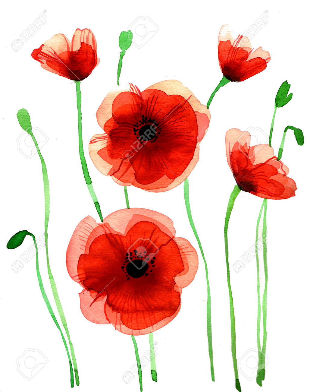 Red poppies flowers watercolor hand drawn illustration on white illustration red poppies flowers watercolor hand drawn illustration on white background mightylinksfo