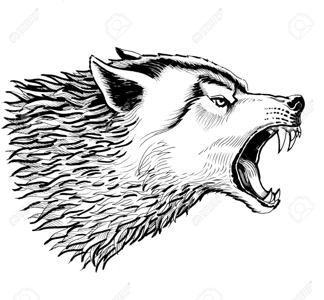 ea7cd1c1b Angry Wolf. Black And White Ink Drawing Stock Photo, Picture And ...