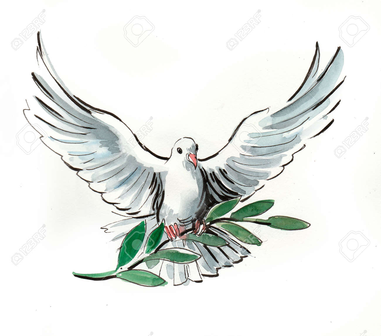 White dove. Watercolor illustration - 101758766