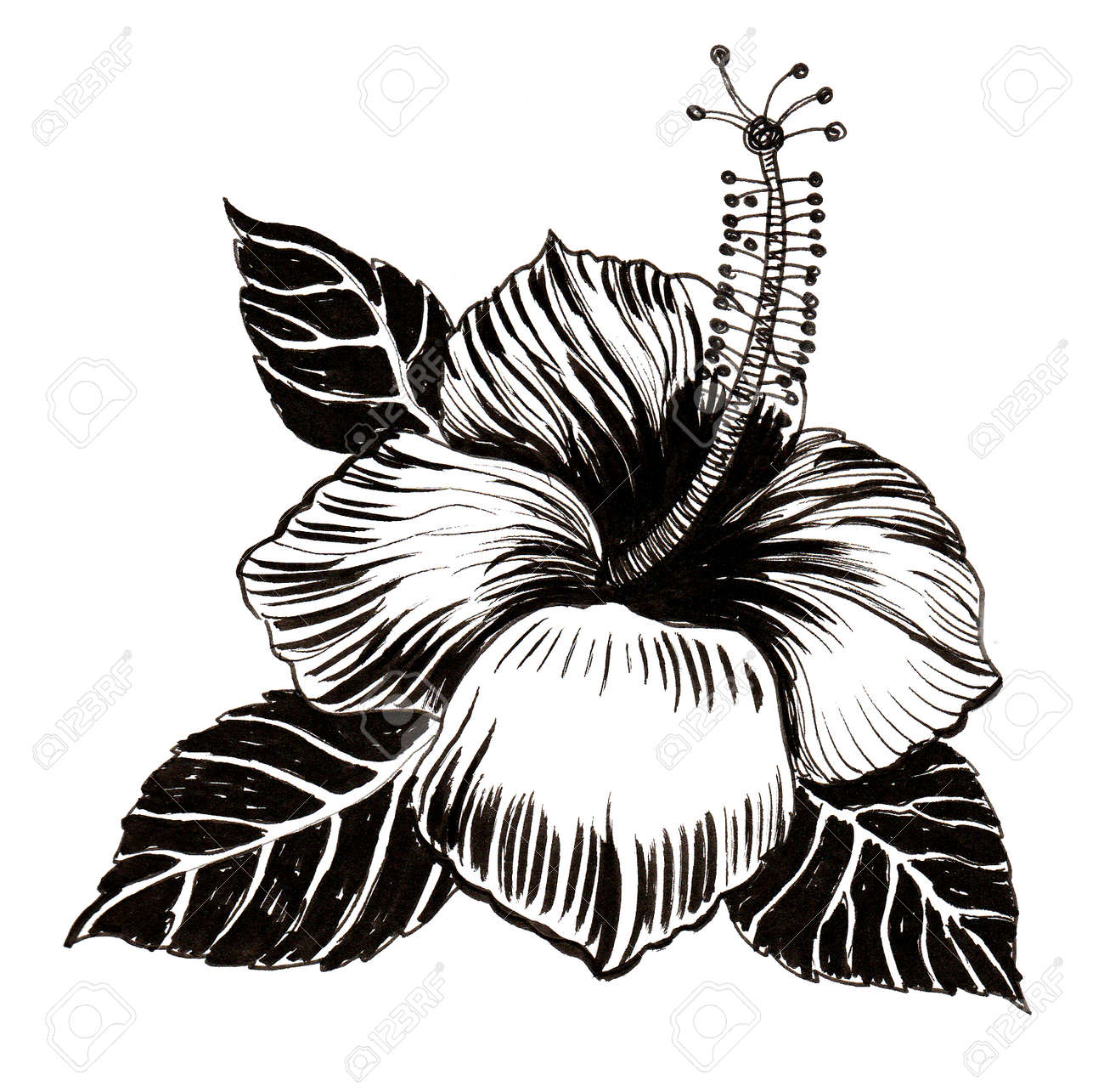 Hibiscus flower ink black and white drawing stock photo picture hibiscus flower ink black and white drawing stock photo 99902499 izmirmasajfo