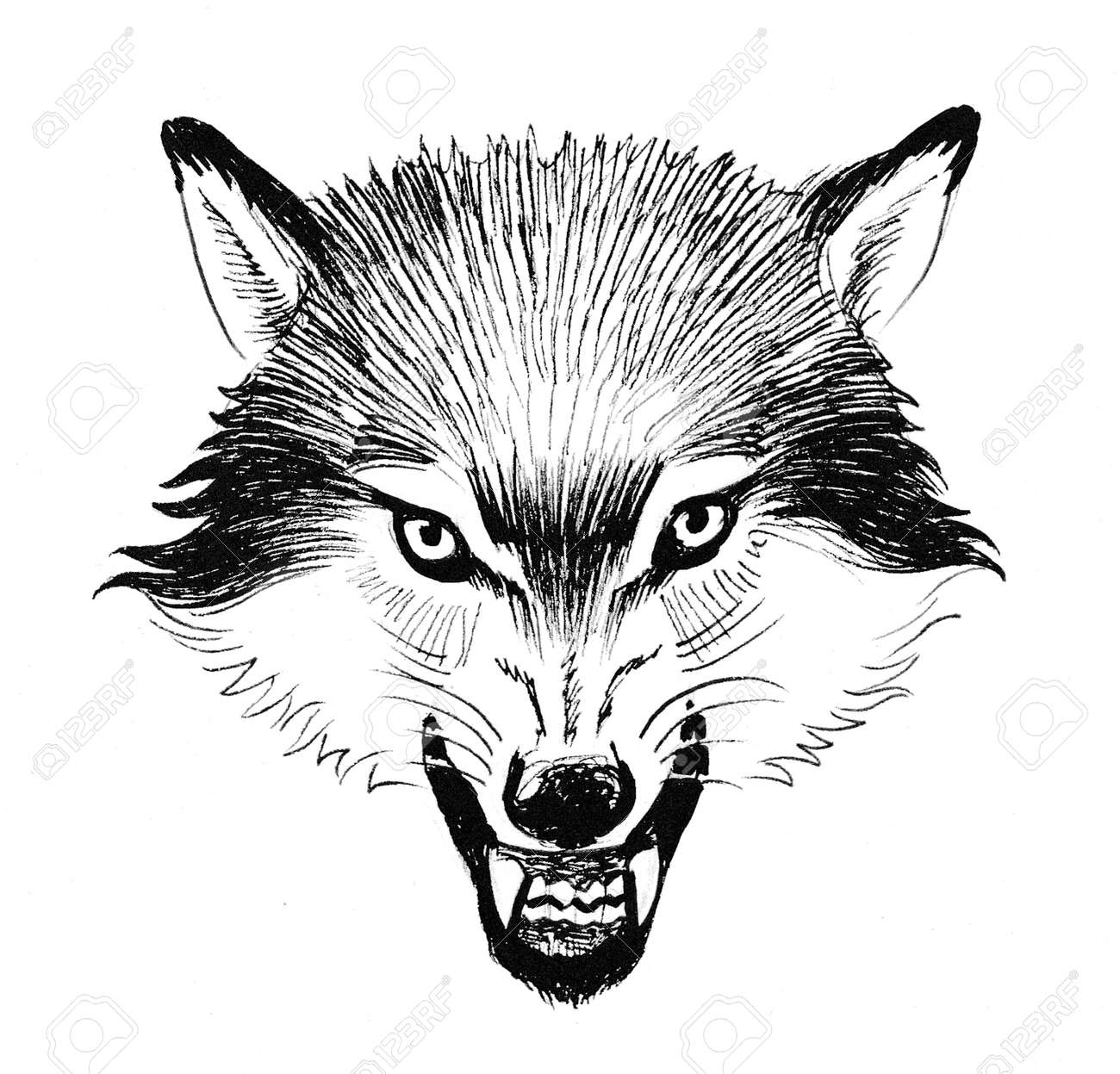 e9d9ea80d Angry Wolf Head. Ink Black And White Drawing Stock Photo, Picture ...