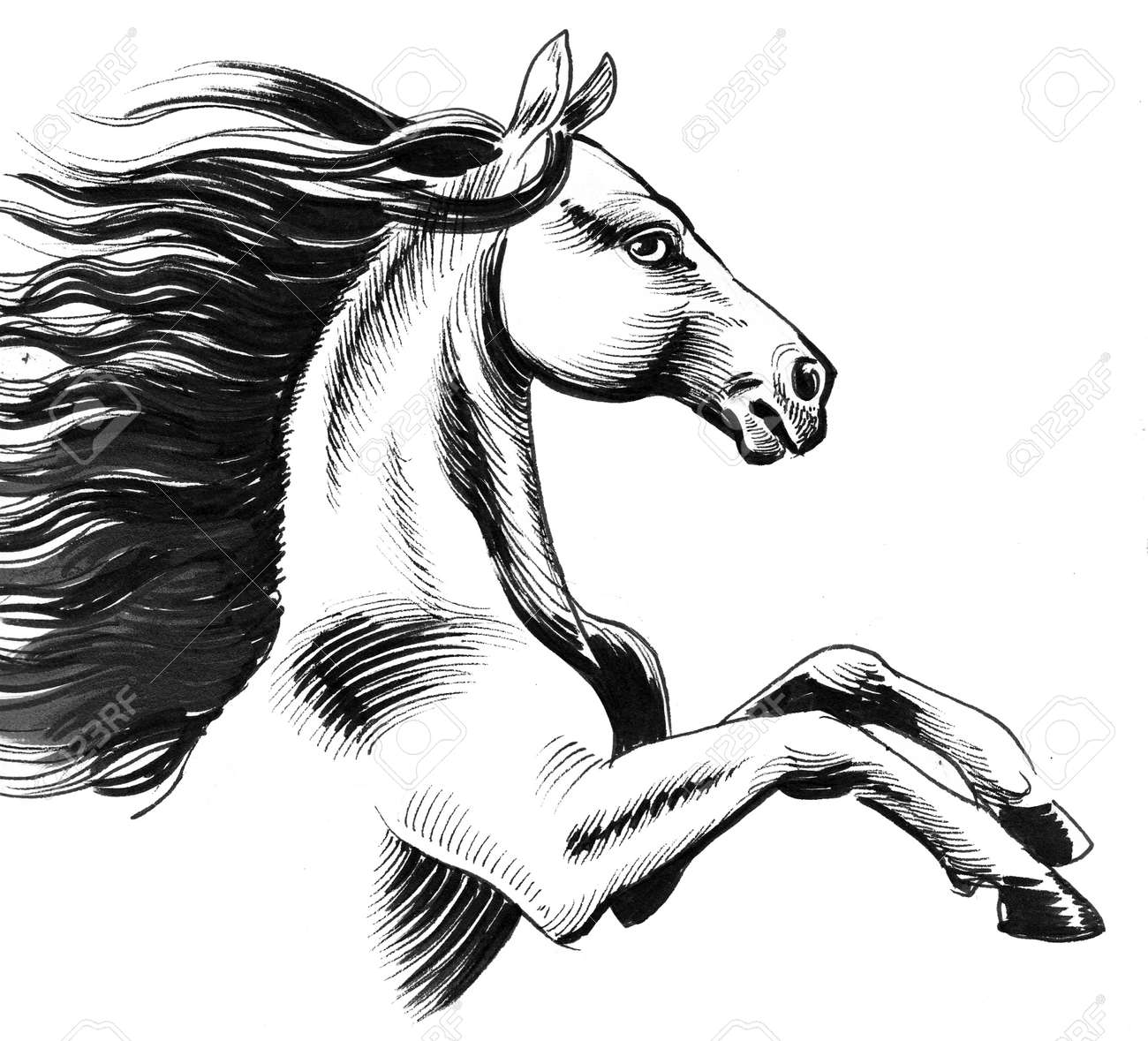 Wild Horse Ink Black And White Drawing Stock Photo Picture And Royalty Free Image Image 120883436
