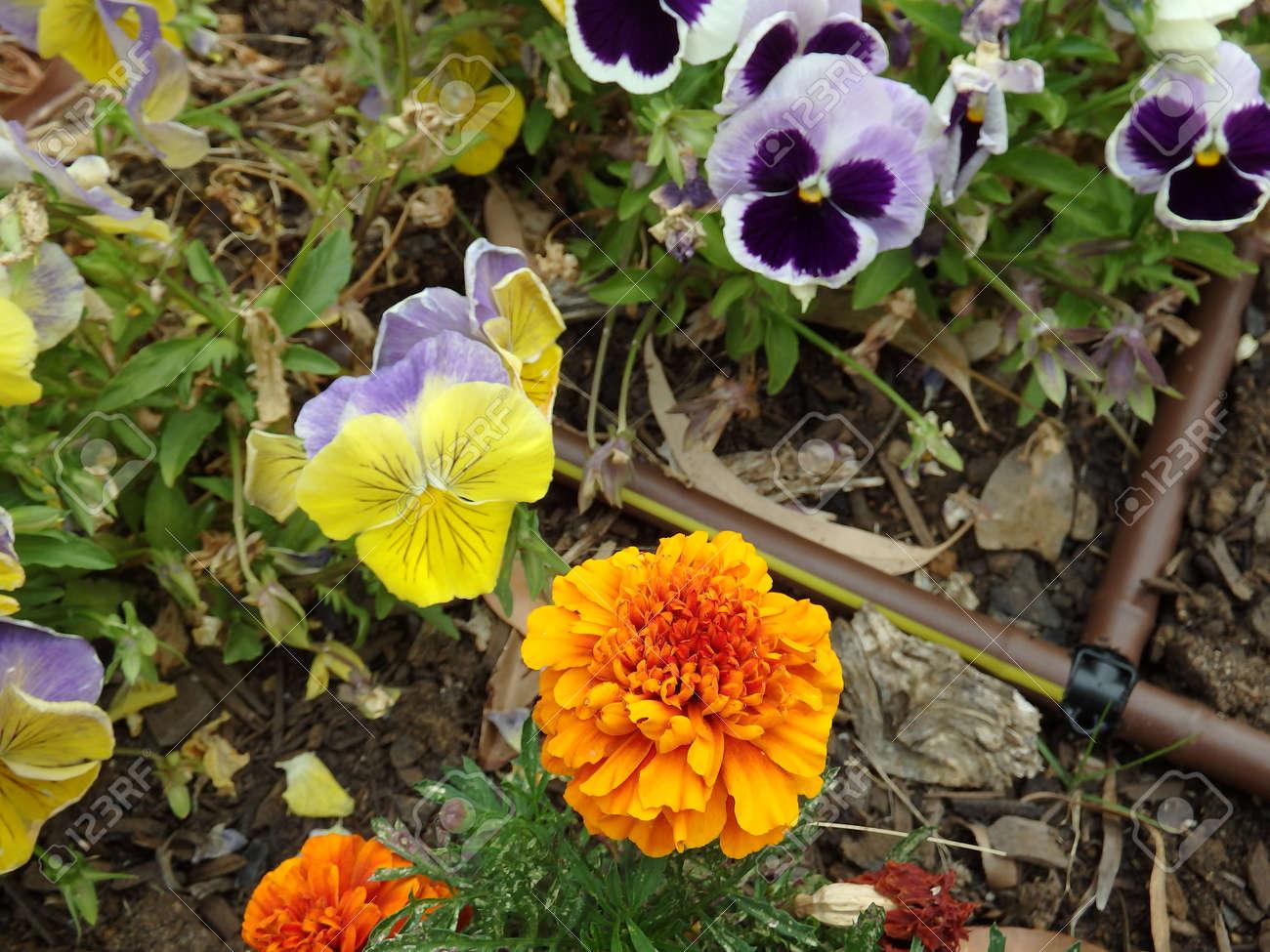 Pretty Flowers Lizenzfreie Fotos Bilder Und Stock Fotografie Image