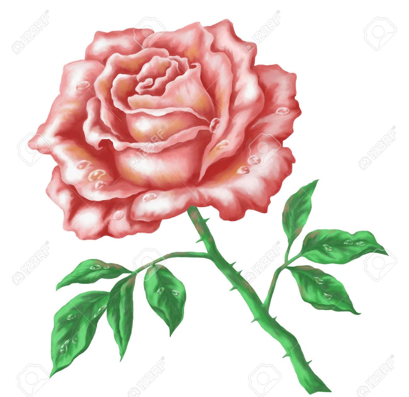 Fleur Rose Image Acrylique Peinture à La Main Tirage Isolé Sur