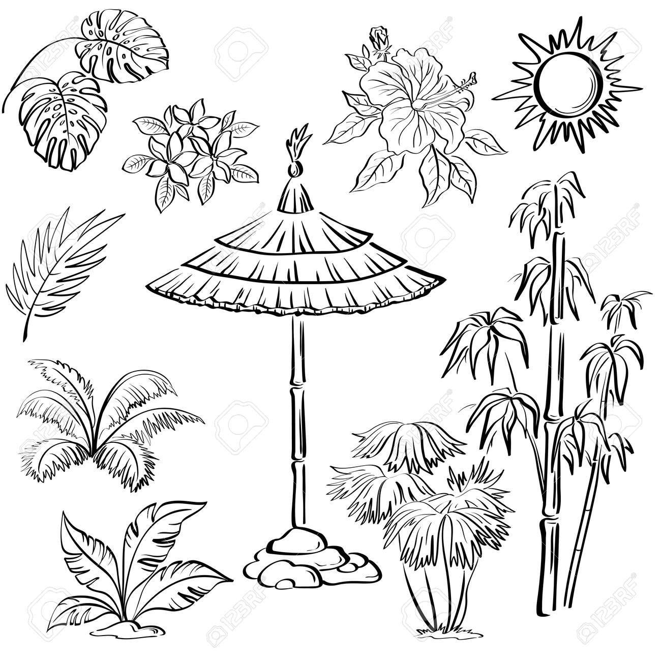 Exotic objects set, black contour on white background  umbrella canopy, plants, leaves, flowers, the sun Stock Vector - 17120373