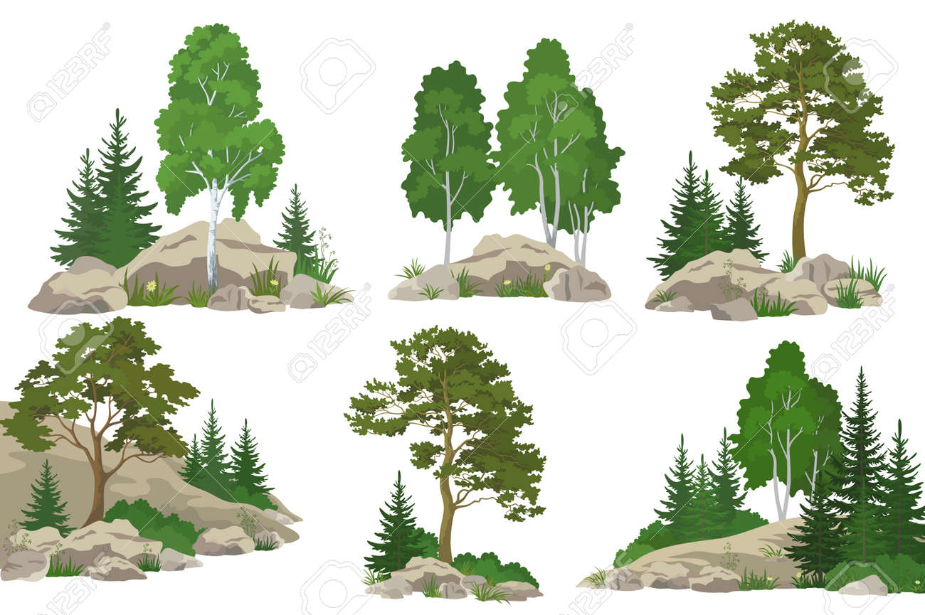 Set Landscapes, Coniferous and Deciduous Trees, Pine, Fir Tree, Birch, Flowers and Grass on the Rocks, Isolated on White Background. Vector - 61921258