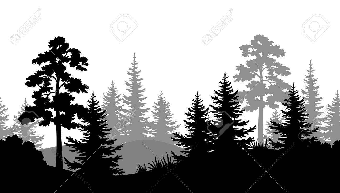 A Seamless Horizontal Summer Forest with Pine, Fir Tree, Grass and Bush Black and Gray Silhouettes on White Background. Vector - 92671719