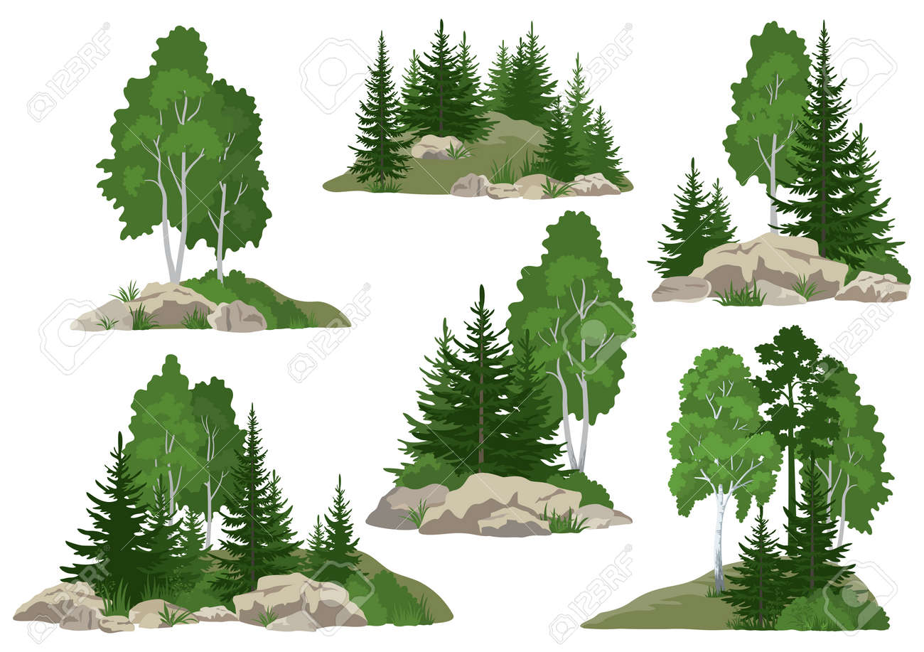 Set Landscapes, Isolated on White Background Coniferous and Deciduous Trees and Grass on the Rocks. Vector - 141285438