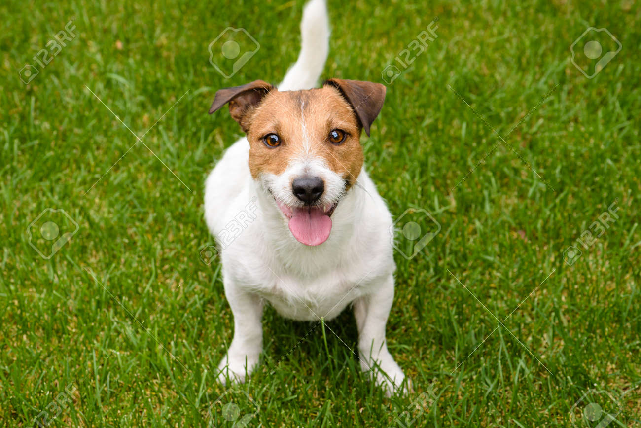 Cute Happy Dog Looking Into Camera Stock Photo Picture And Royalty Free Image Image 73549037