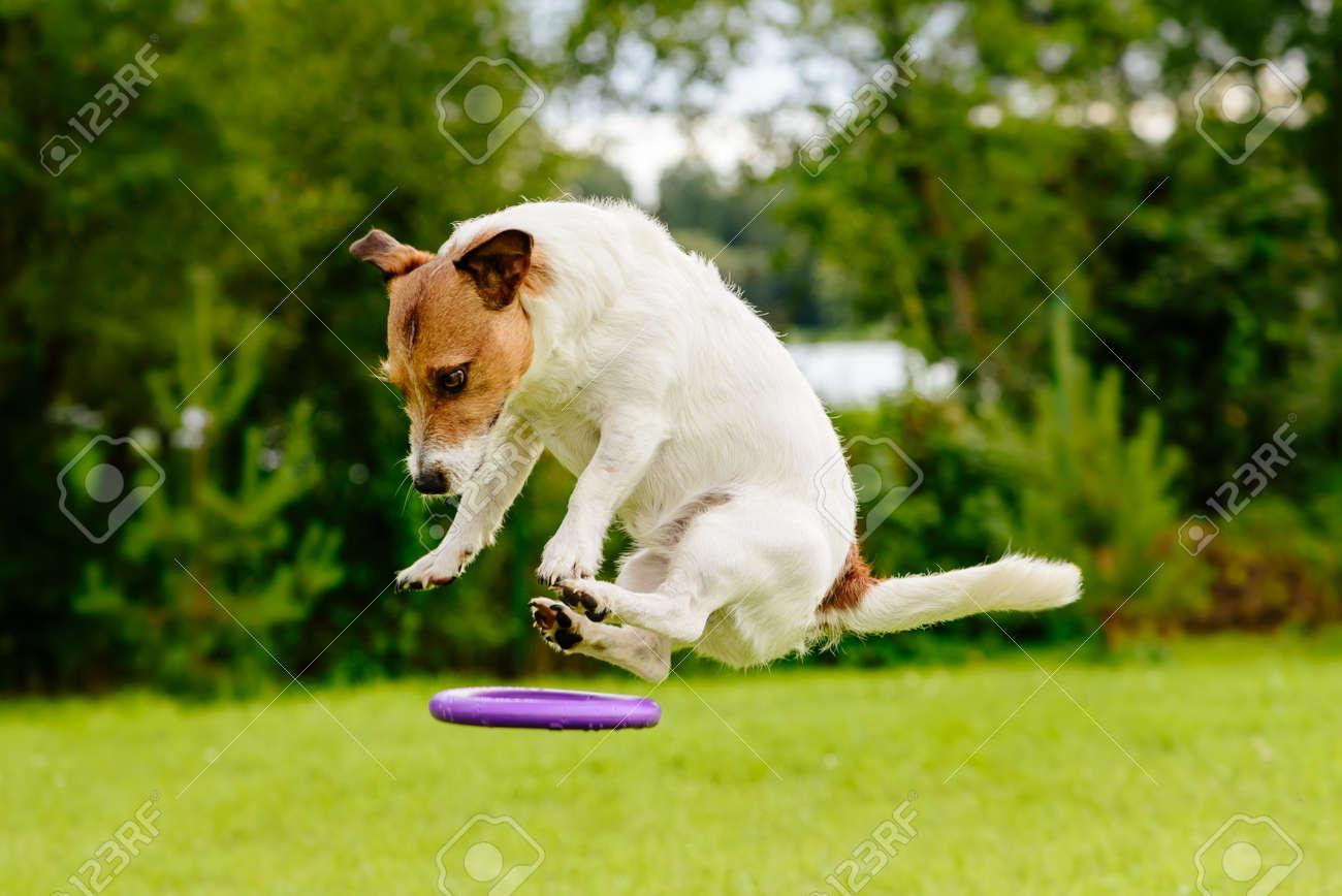 Chien Volant objet volant non identifié: chien volant sur un jouet à disque