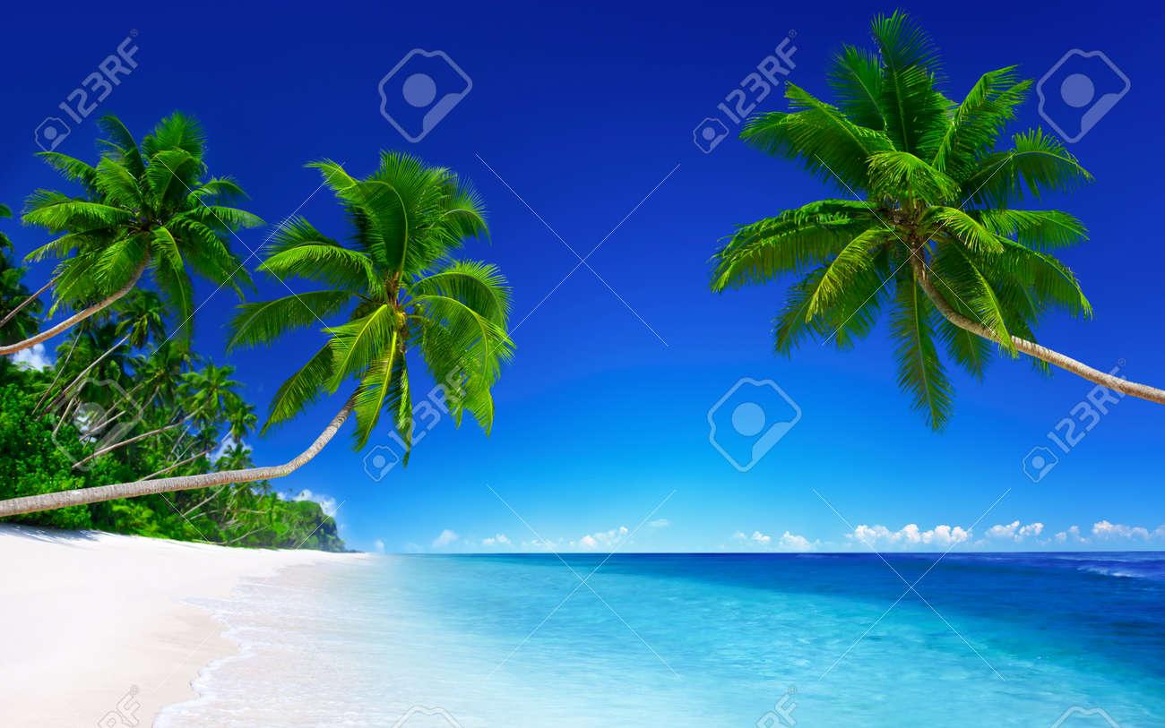 Tha palms on the white sandy beach - 120646531