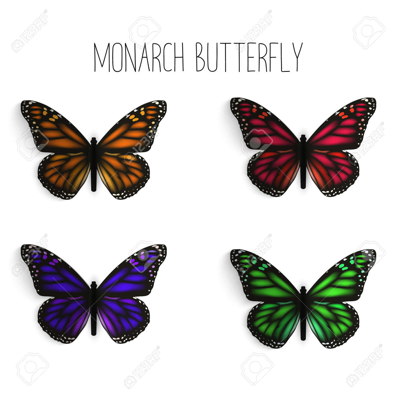Set Of Realistic Monarch Butterflies In Different Colors Royalty