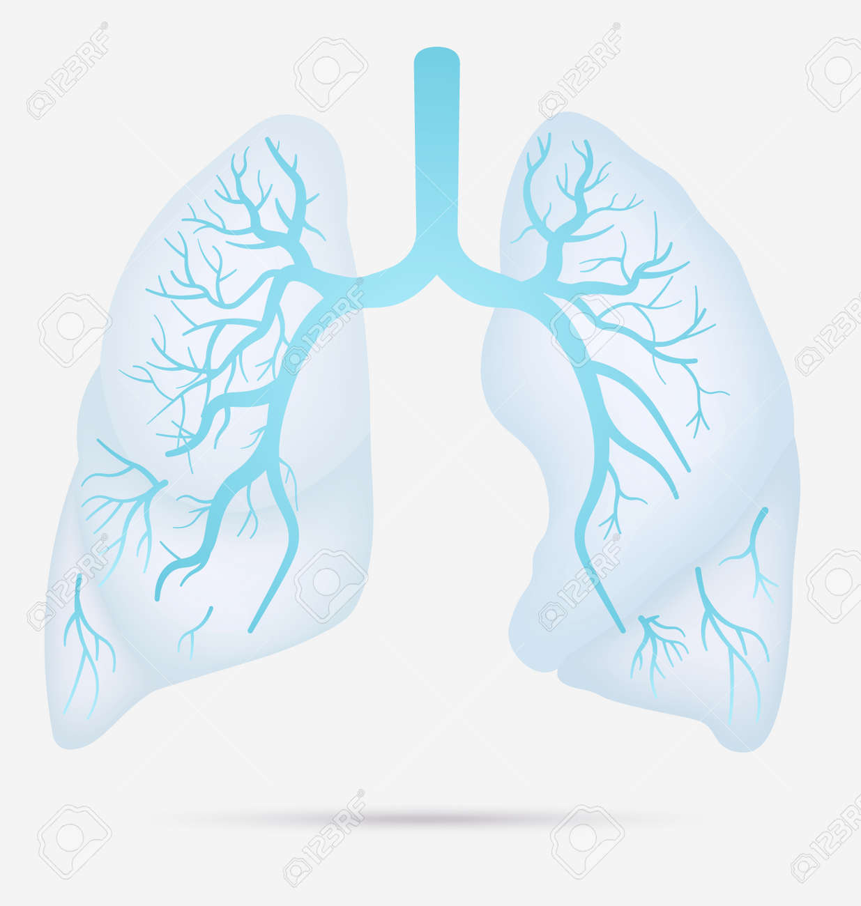 Human Lungs Anatomy For Asthma Tuberculosis Pneumonia Lung