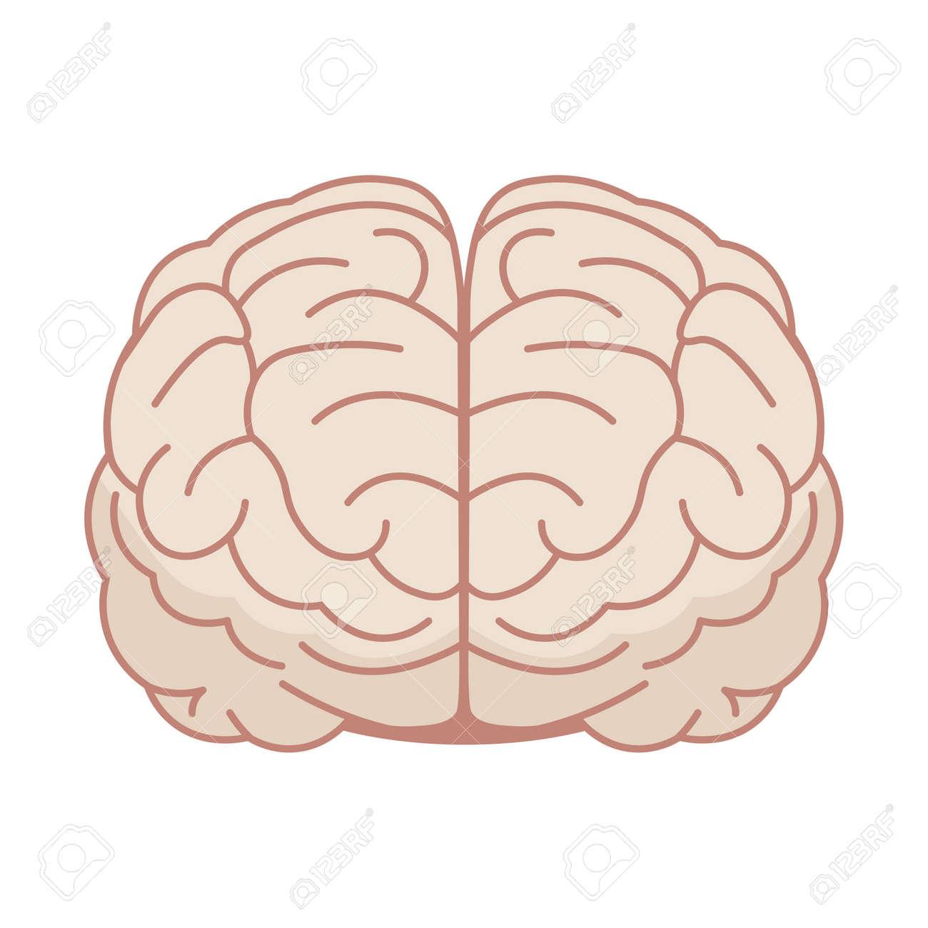 Cerebro Humano En Estilo Plano. Ilustración Del Vector. Vista ...