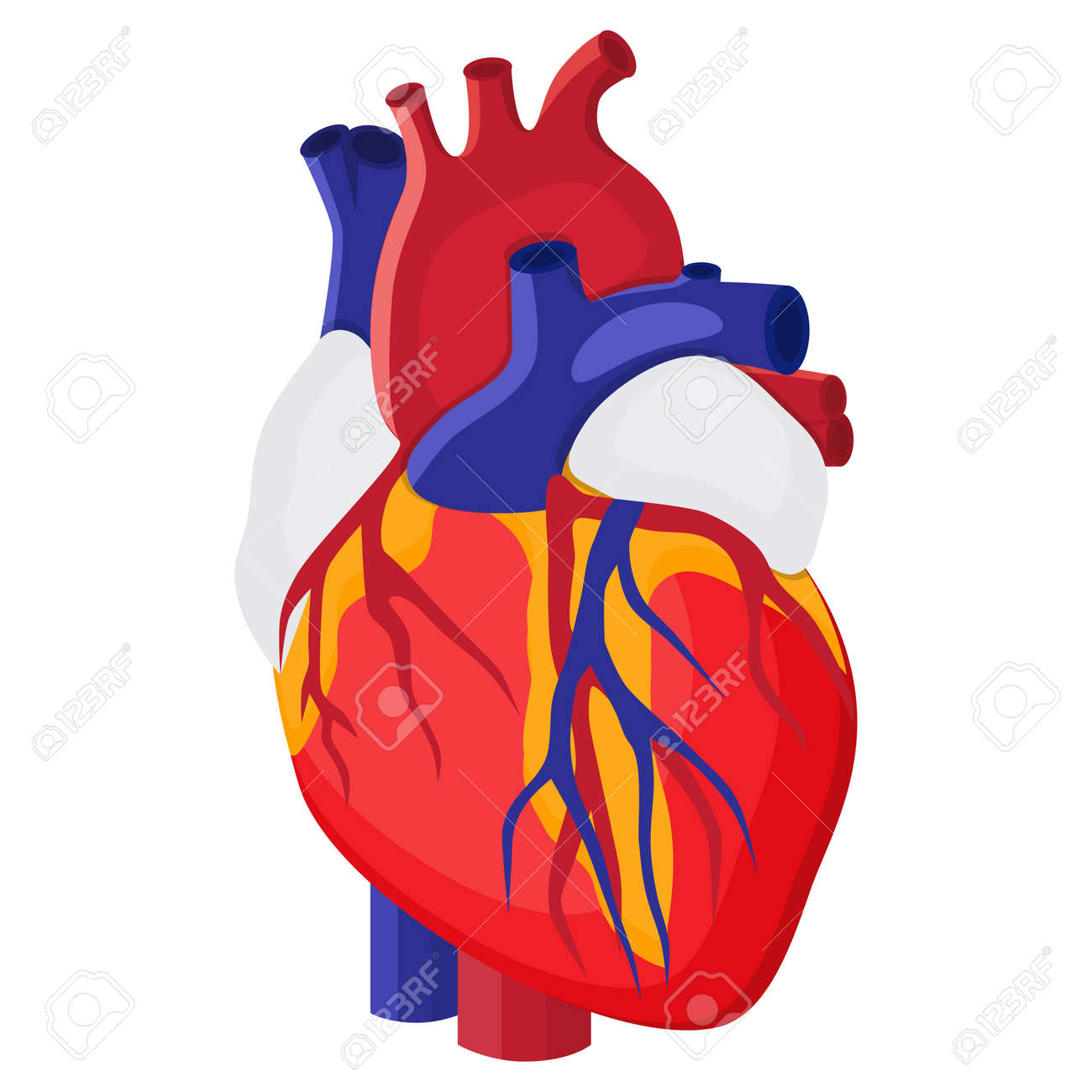 Human heart internal organ vector illustration in flat style human heart internal organ vector illustration in flat style stock vector 79656396 ccuart Gallery