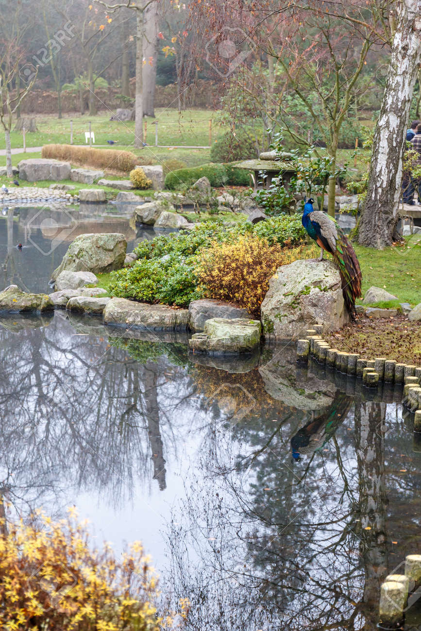 japanese kioto garden in winter london stock photo picture and