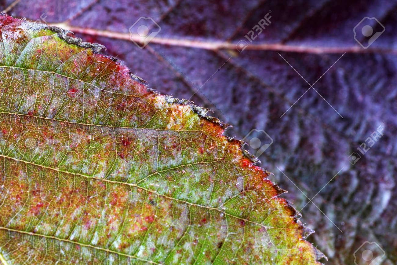 Autumn blackberry leaf - 146845671