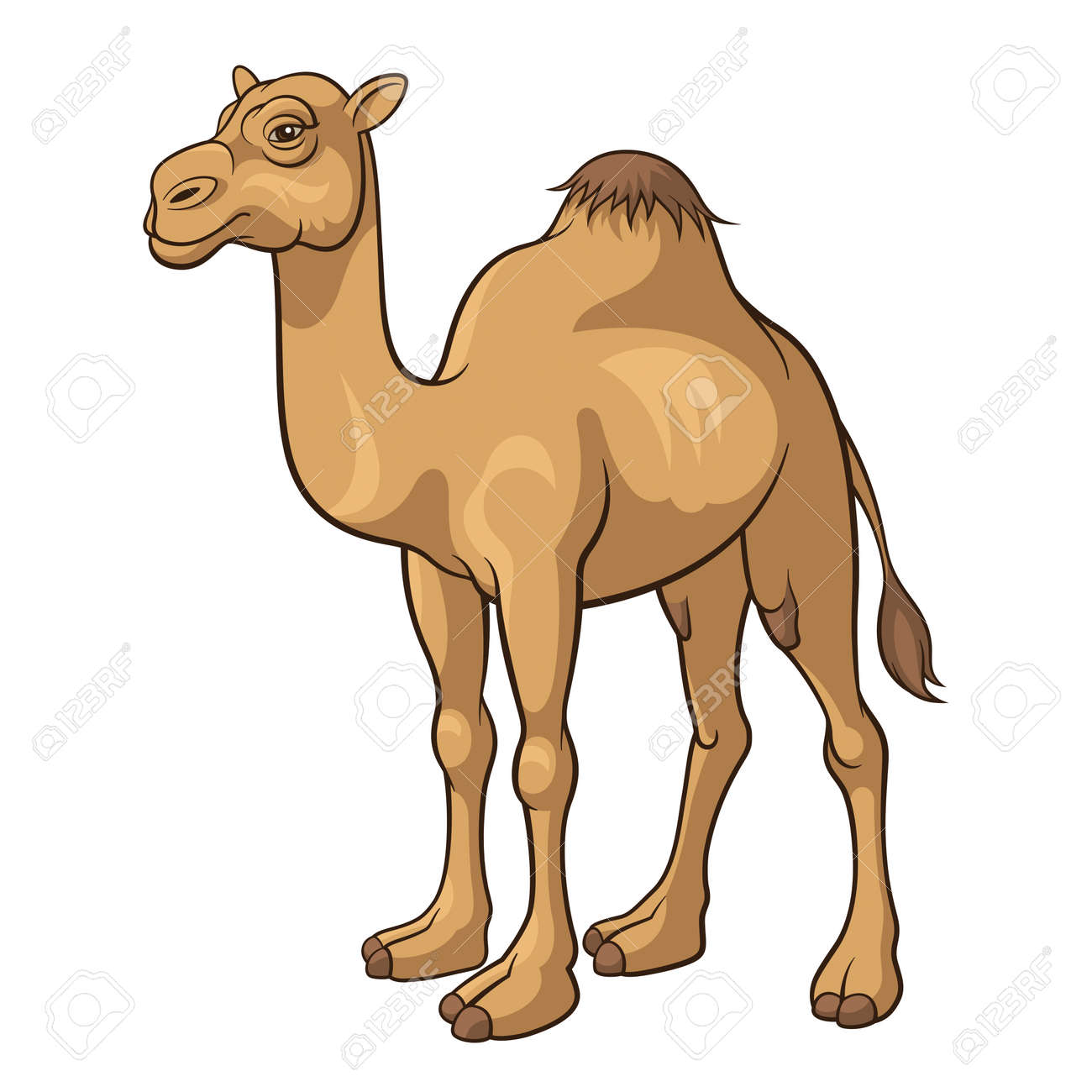 Cartoon camel isolated on a white background, vector illustration - 24560650